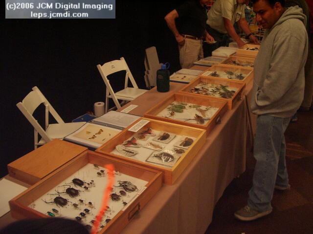 Los Angeles Natural History Museum insect fair 2006