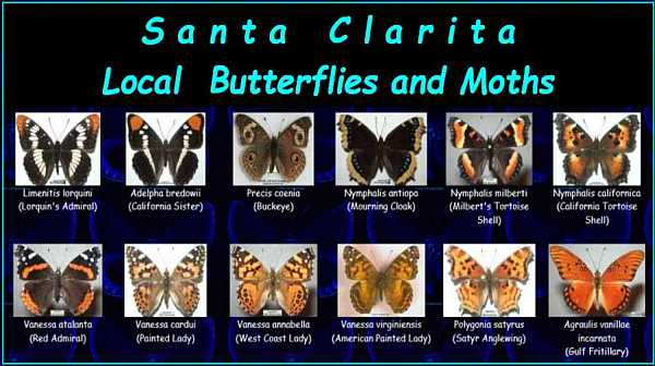 Butterflies of SCV