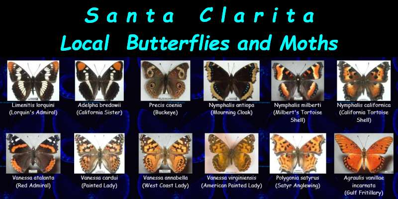 Click to see butterflies and moths from the Santa Clarita area