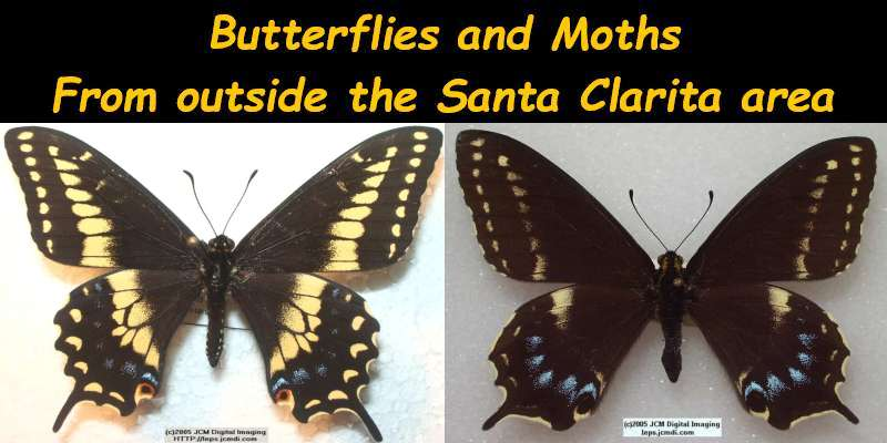 Butterflies and moths from outside the Santa Clarita area