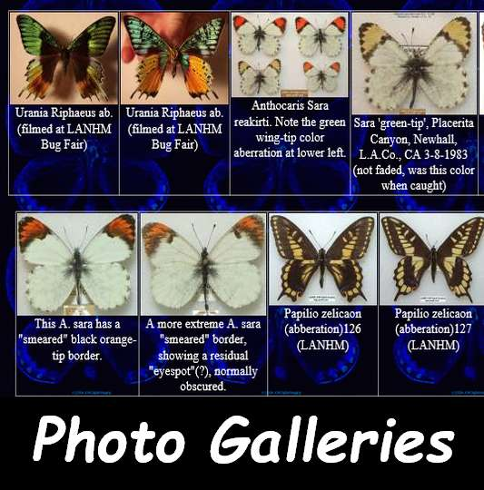 Click to enter the Butterfly and Moth Photo Gallery